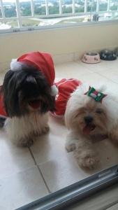 Um Feliz Natal dos meus bebês, Theo e Duda!